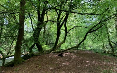Penstave Copse and Didworthy – part 1